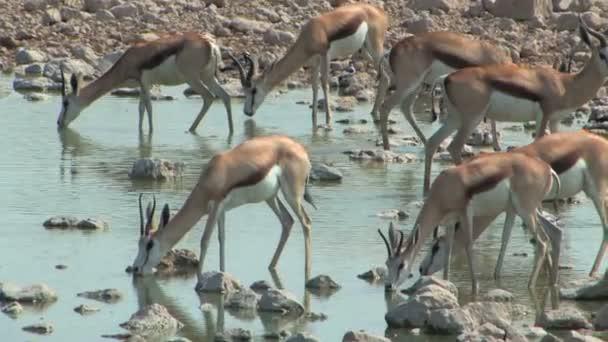 Inni a vizet lyuk Springbok
