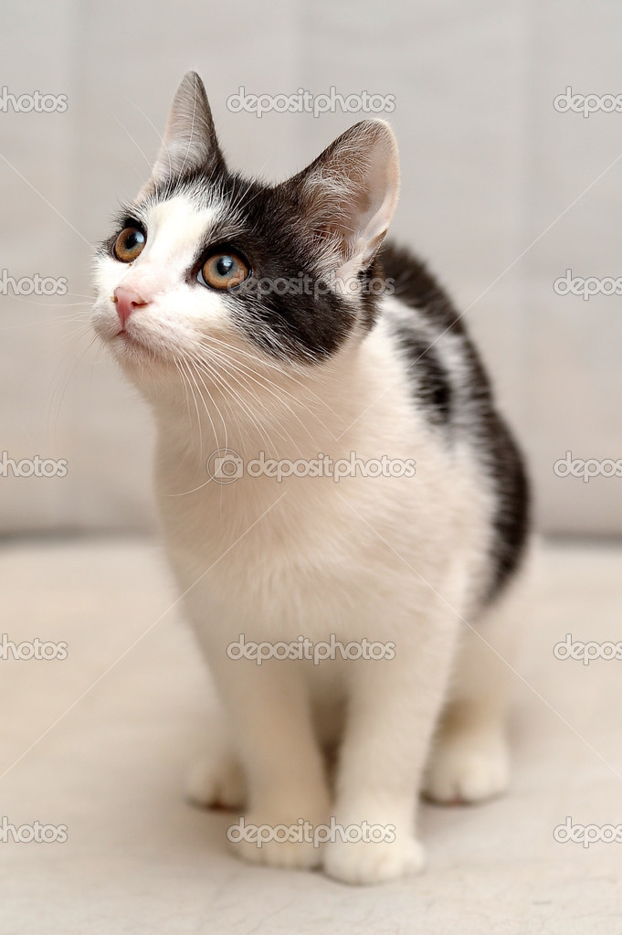 cats in the cradle lyrics