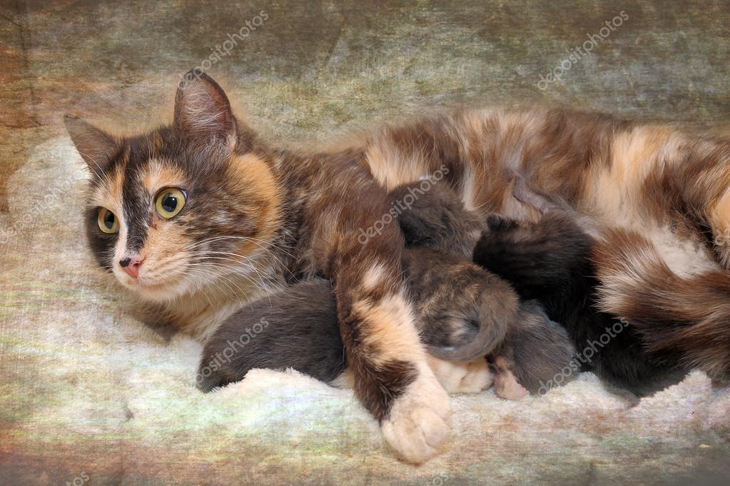 Мама кошка и котята. Мама кошка с котятами — Стоковое фото ...