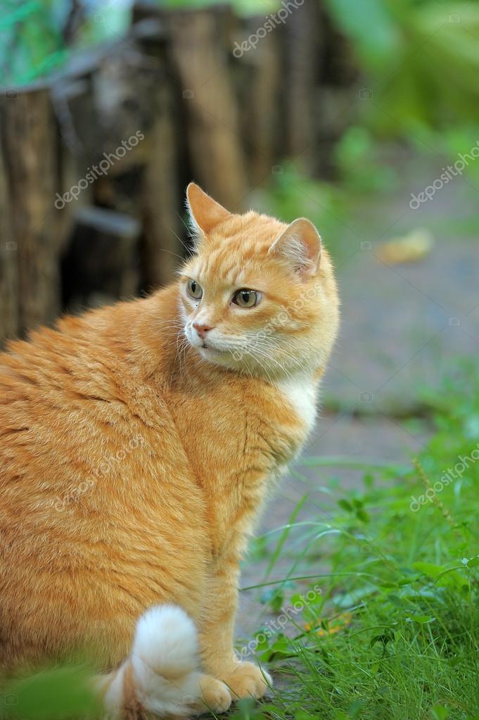 rousse chatte trentenaire lesbiennes porno photos