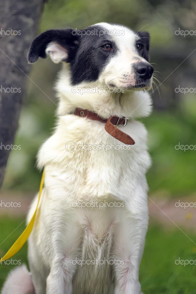 собака с черными пятнами порода