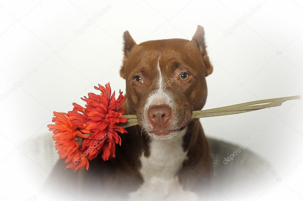 Собачки цветы картинки 2