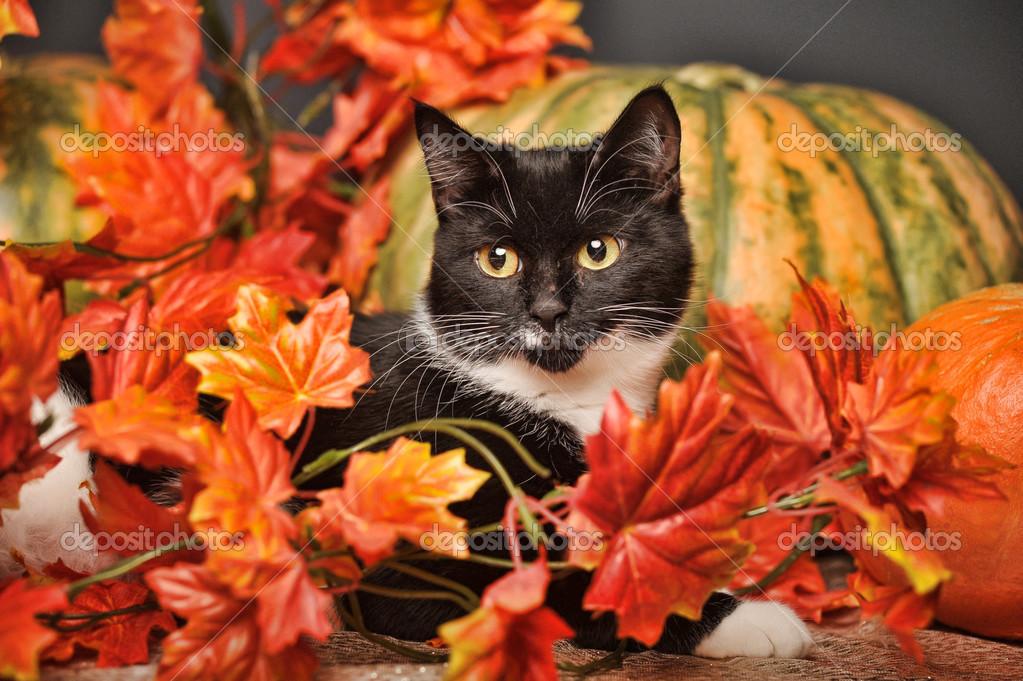 Face Book Cover Black Cat