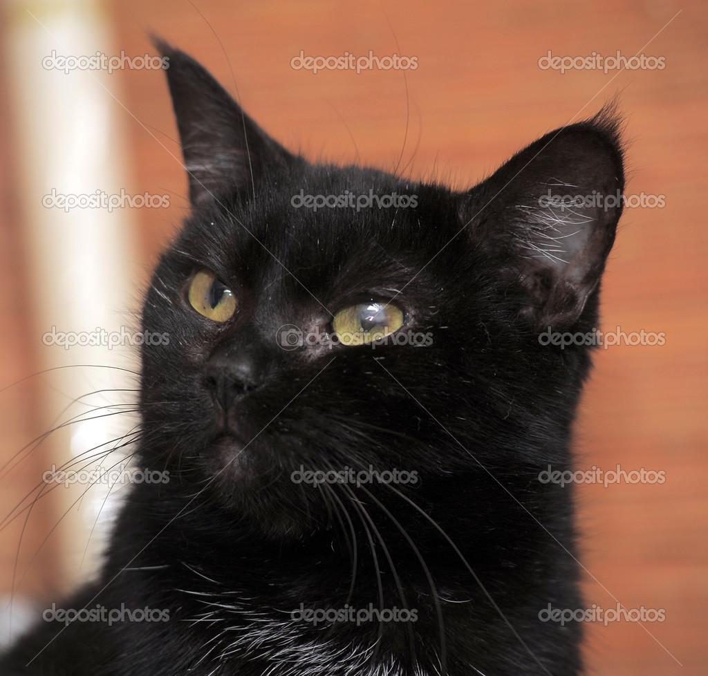 épais noir poilu chatte pics