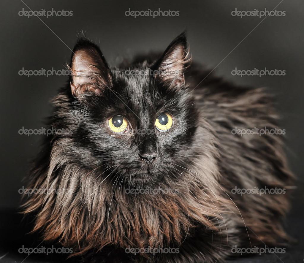 noir chatte téléchargements vidéo de sexe européen