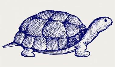 Ear tortoise
