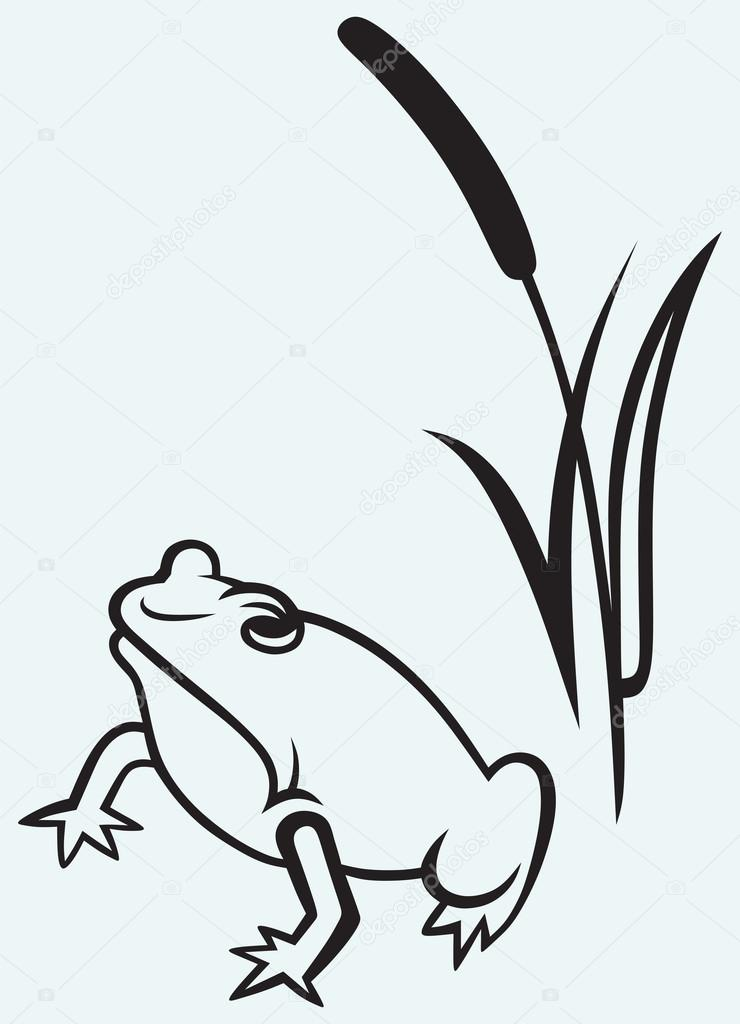 Frog near reed