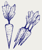Photo Carrot vegetable with leaves