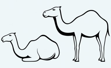 Silhouettes of camel