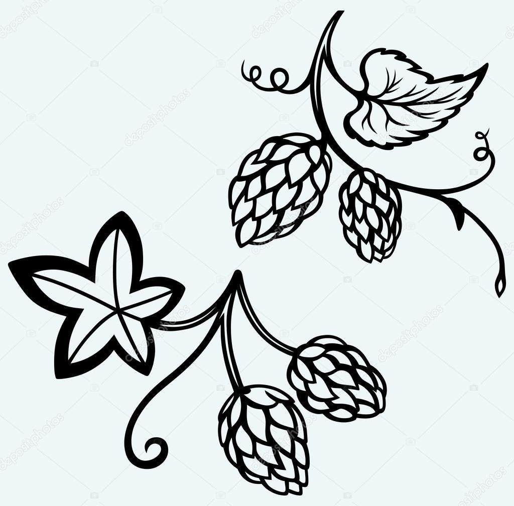 Ingredients for beer. Hops