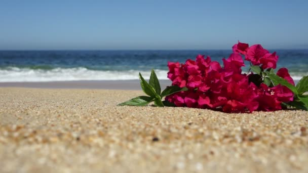 Tropical Beach Flowers