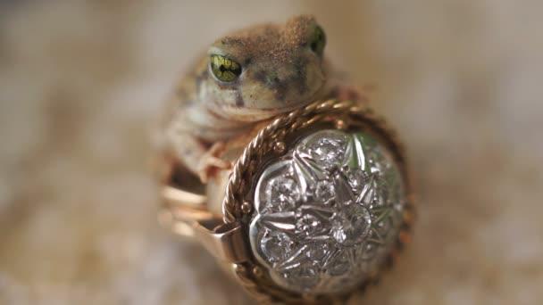 béka herceg gyűrű mese fantasy