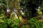 Lesní krajina listy a větve