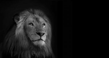 Royal King Lion Black and White Isolated Card