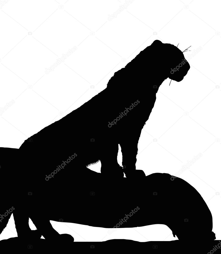 Portrait Silhouette of Young Leopard on Branch