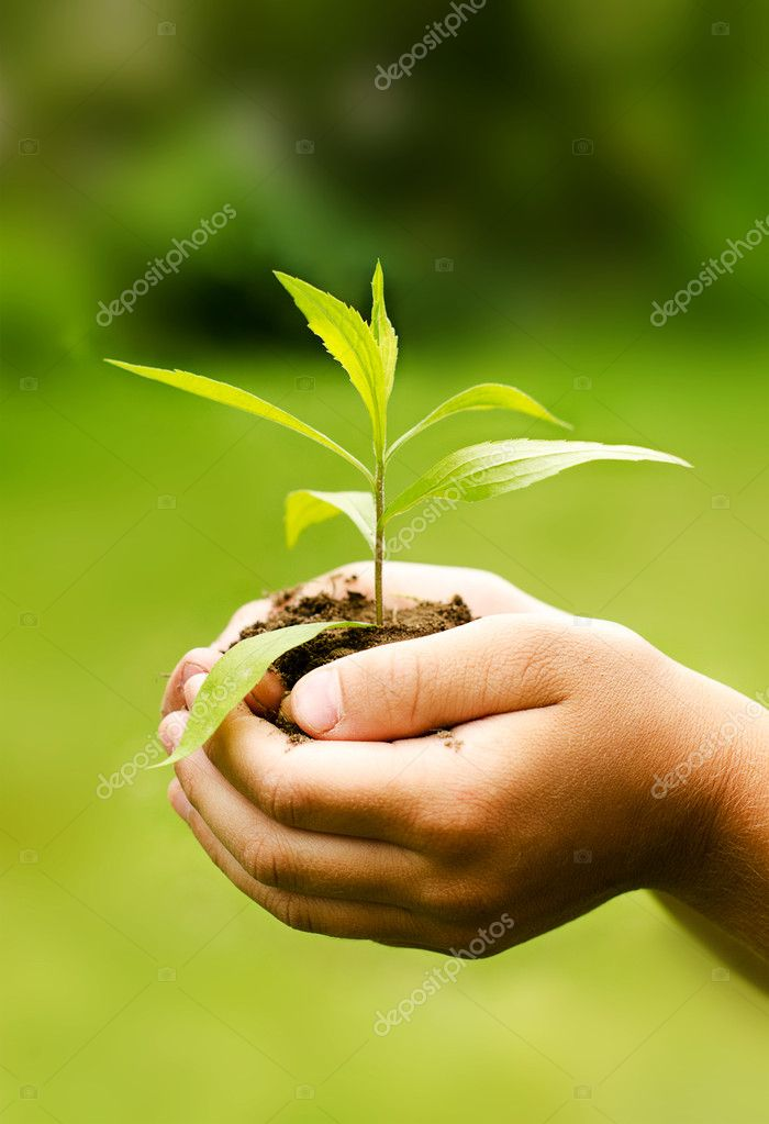 Children hands holding young plant against spring green background.
