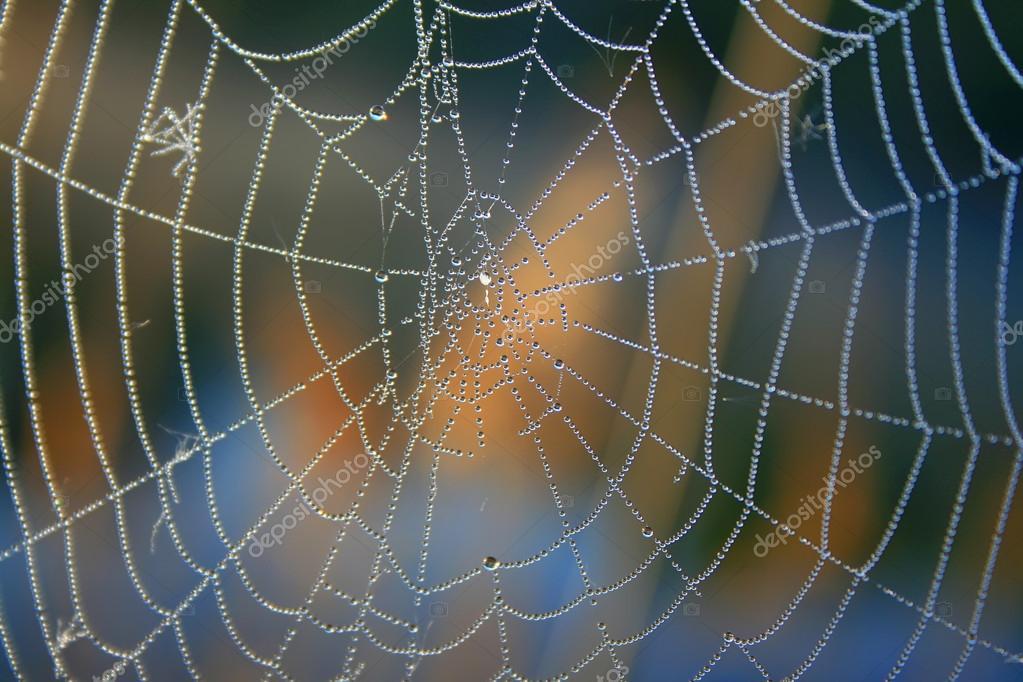 Morning dew on spider webs