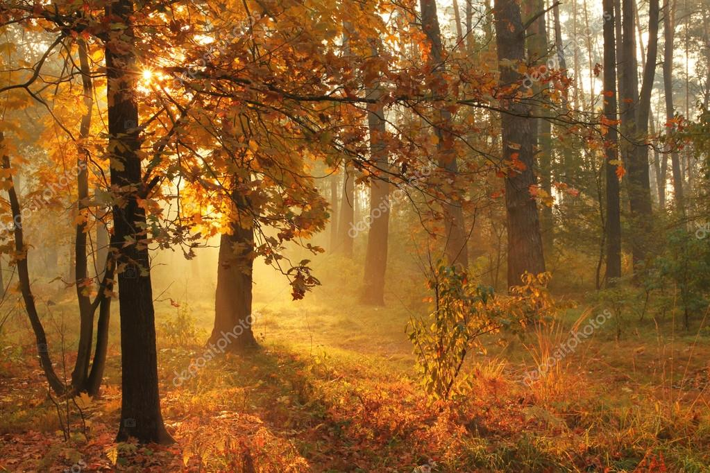 Autumn misty forest