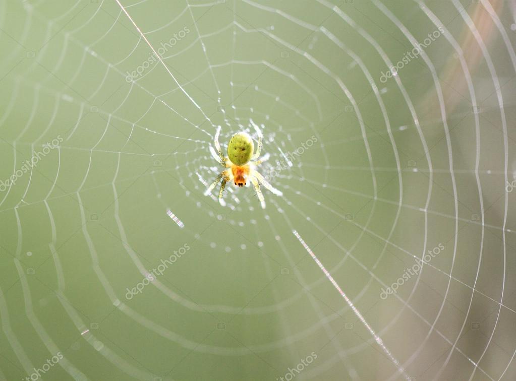 kleine gelb gr ne spinne stockfoto 32270791. Black Bedroom Furniture Sets. Home Design Ideas