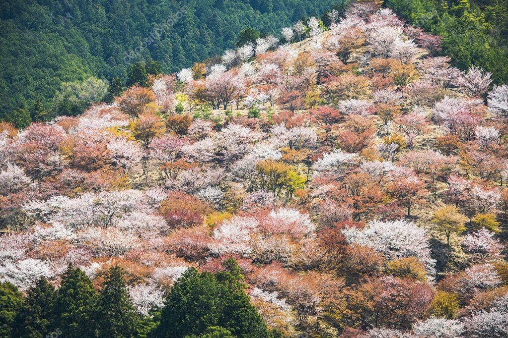 Yoshinoyama Japan