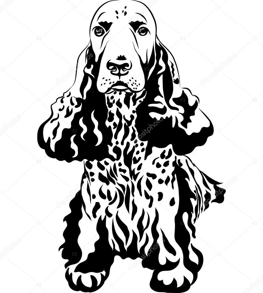 Dibujos Dibujo De Cocker Spaniel Blanco Y Negro Dibujo