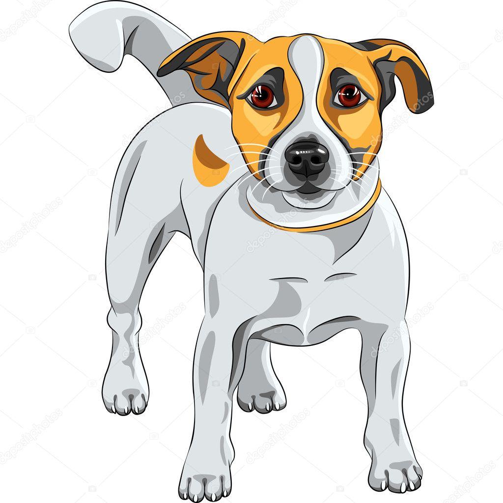 Векторный рисунок собаки породы Джек Рассел терьер ...
