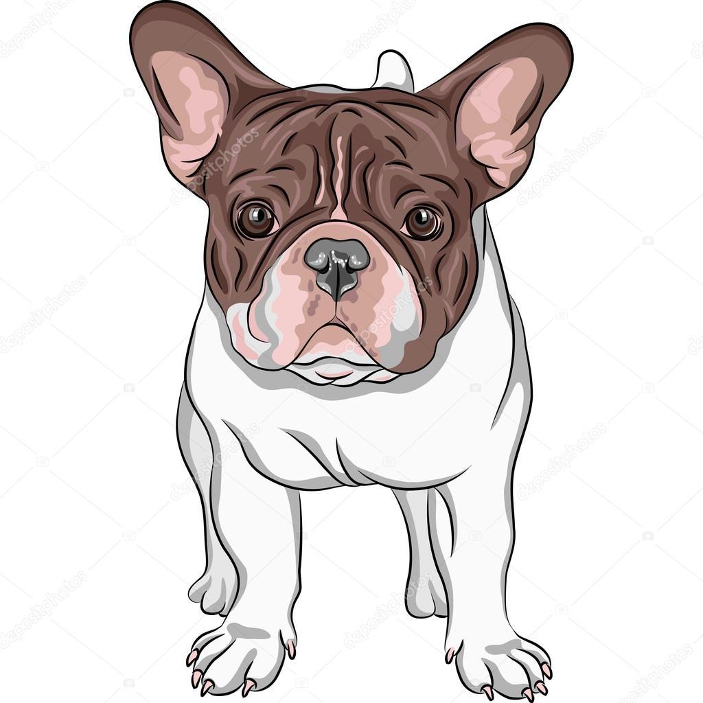vetor desenho cão doméstico raça de bulldog francês vetores de