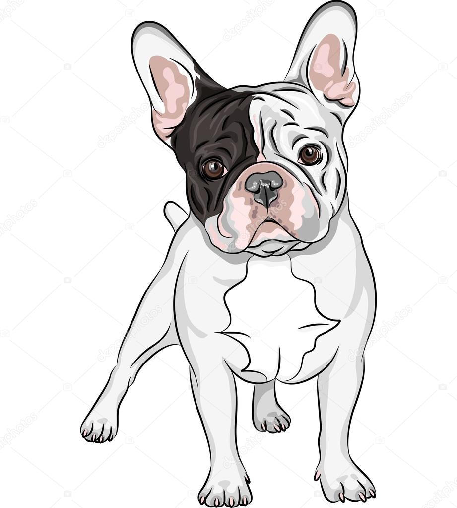 vetor desenho cão doméstico raça de bulldog francês vetor de stock