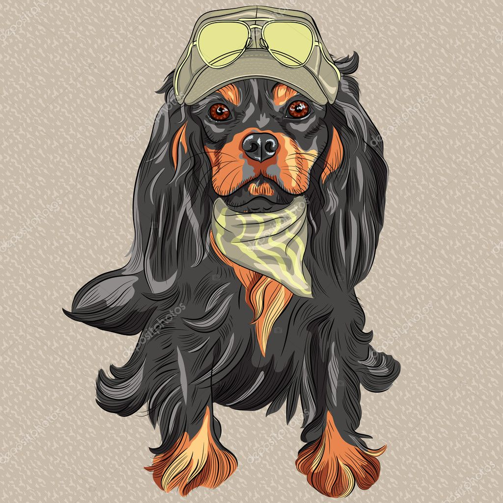 Vector Cute Hipster Dog Cavalier King Charles Spaniel Breed Stock