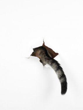 cat's tail through a hole in a white paper