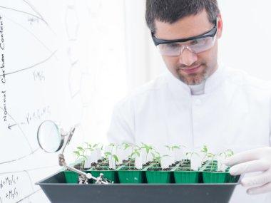 scientist analyzing seedlings