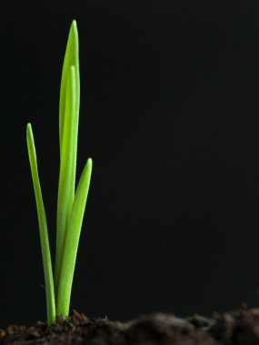 young plant growing from fertile soil