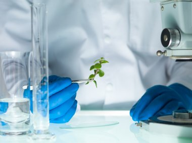 Analyzing a plant in the lab