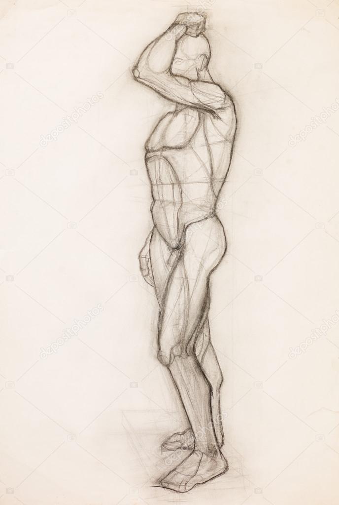 estudio de la anatomía del cuerpo humano — Fotos de Stock ...