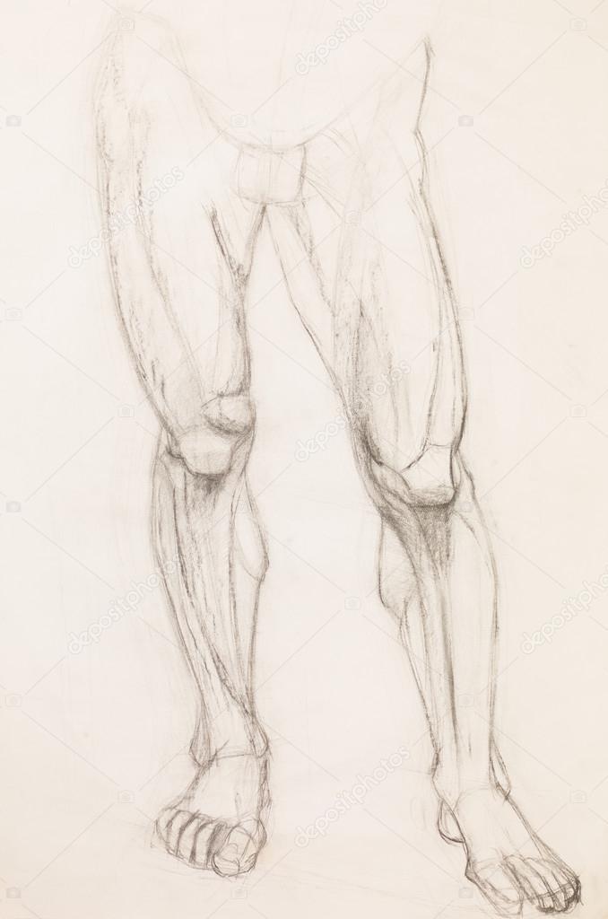 piernas humanas, estudio de la anatomía — Fotos de Stock ...