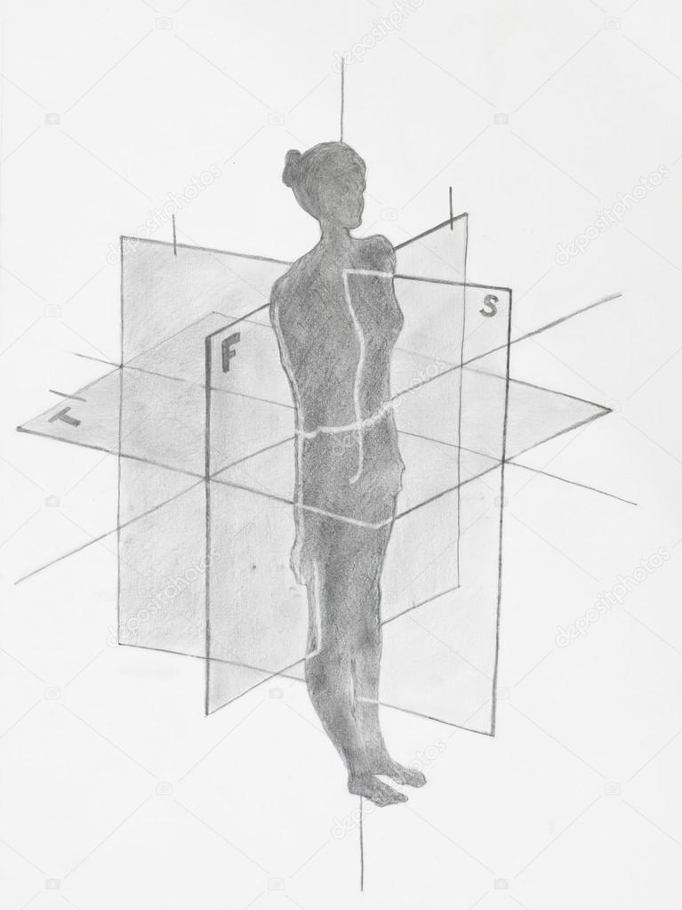 dibujo a lápiz de la anatomía — Fotos de Stock © shotsstudio #34937569