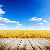 Fotografia Campo di grano giallo