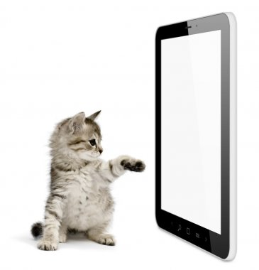 Black tablet pc on white background and kitten pushing screen.