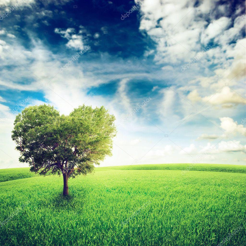 Green field with heart shape tree under blue sky.