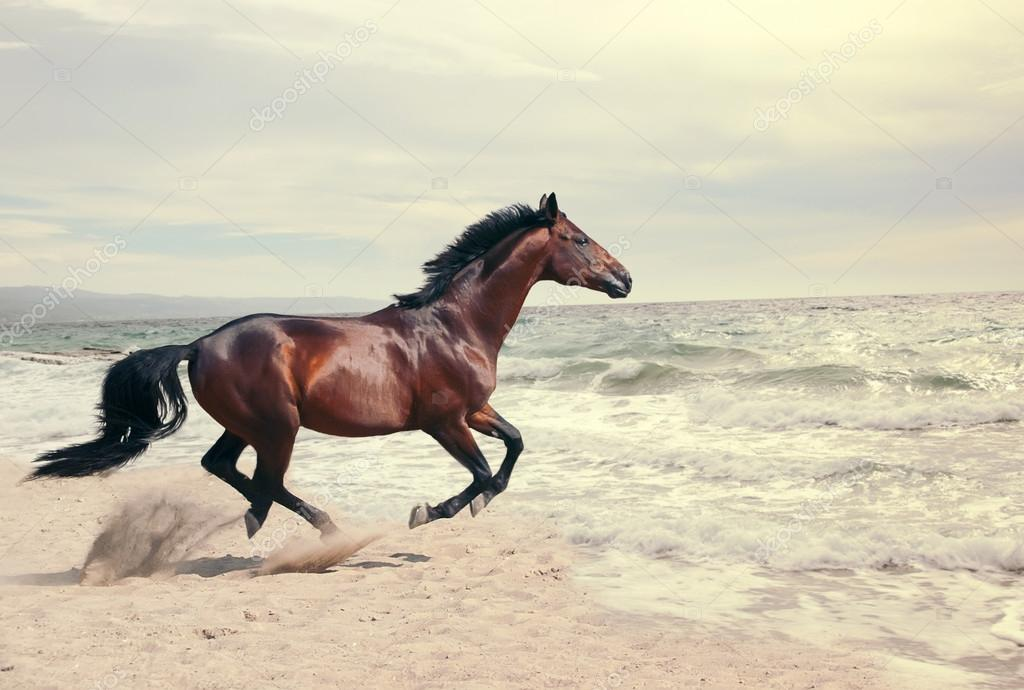 wonderful marine landscape with beautiful bay horse