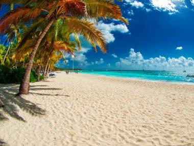 tropical beach in Dominican republic. Caribbean sea. Saona islan