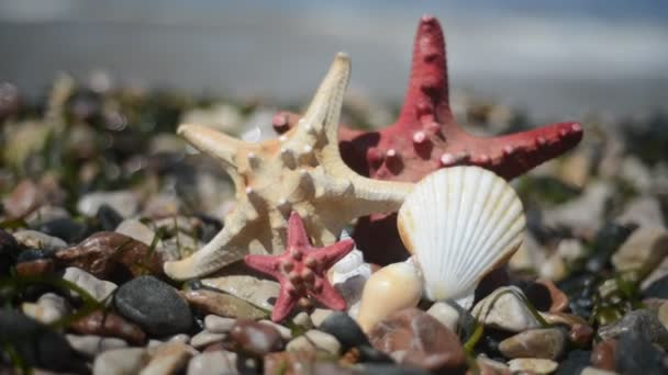 hvězdice a mušle na písku