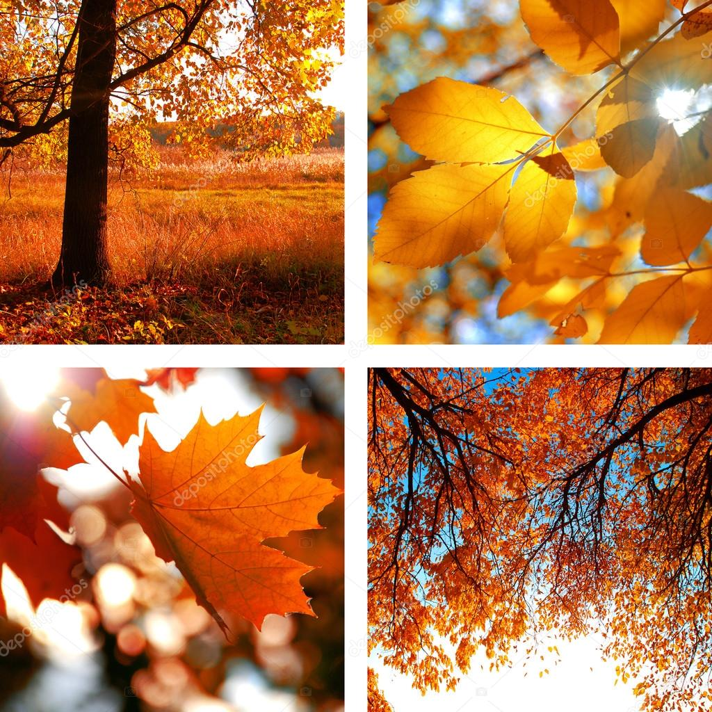 Collage of photos of autumn