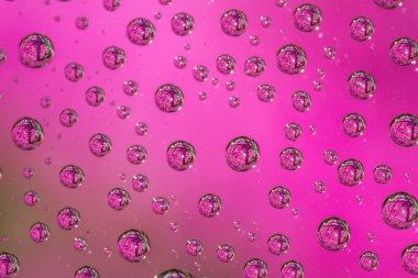 flowers in water drops