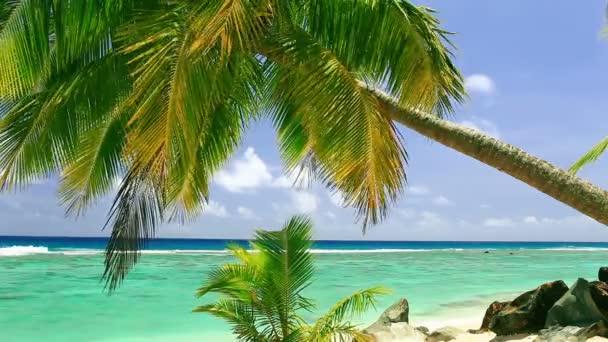 vlny na tropické pláži s Palmou