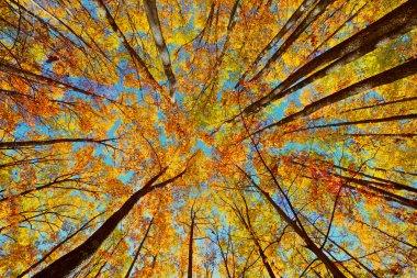 """Картина, постер, плакат, фотообои """"красивый осенний пейзаж с лесом """", артикул 14977119"""
