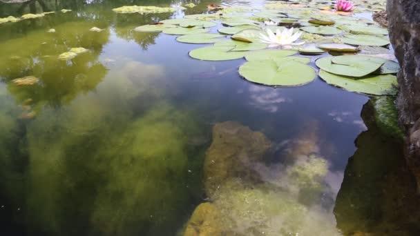 odraz oblohy v rybníku