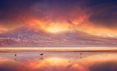 Volcanic Vibes