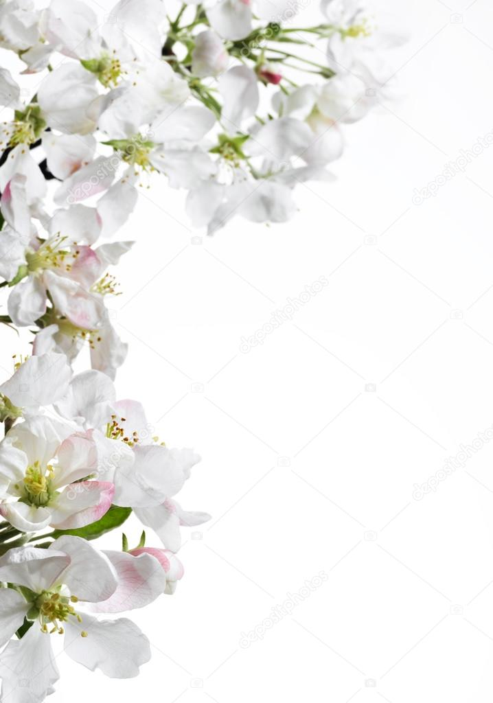 flores blancas Foto de stock dedukh 40833467