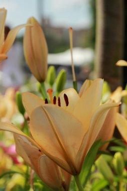 Flower textured background